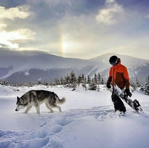 Snowboarder with husky
